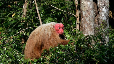 5 More Animals You Can See On A Valencia Travel Cusco Tour