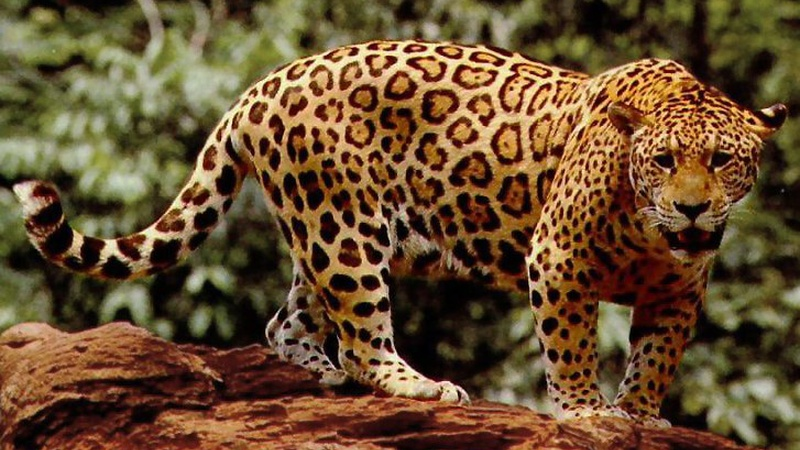 5 Amazon Animals: What You Can See On A Valencia Travel Cusco Tour