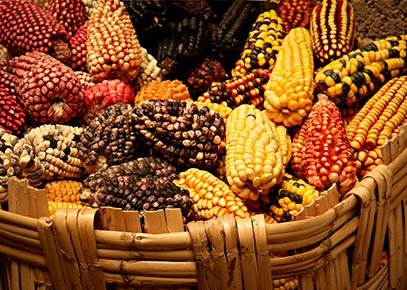 Peruvian Cuisine: Explore What Makes This Country Delicious!