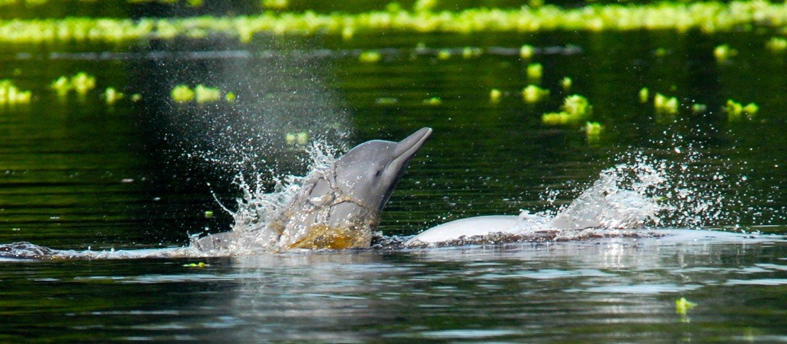 Delfin I Cruise to Pacaya-Samiria Reserve
