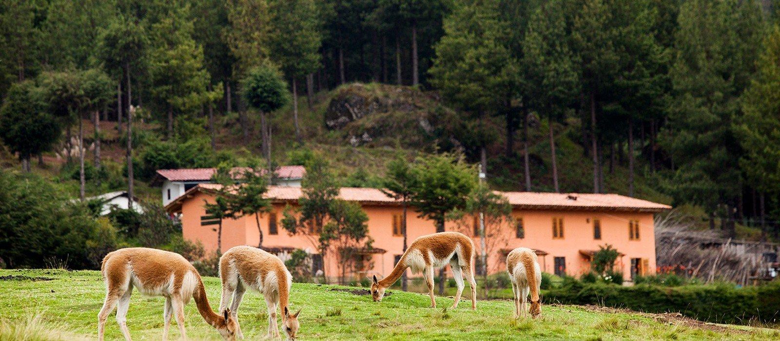 Granja Porcón Community Farming Experience