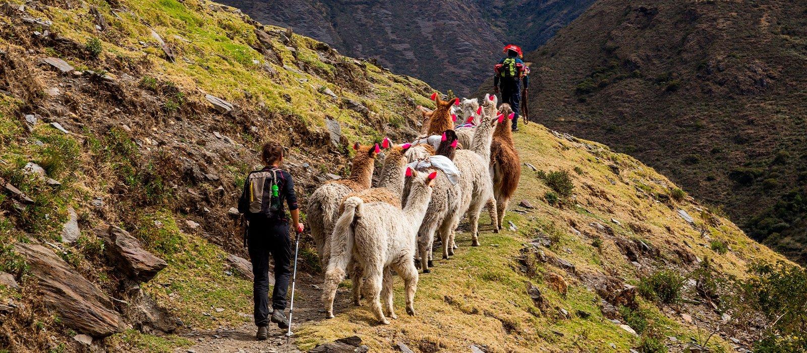 Lares Trek to Machu Picchu - Not Accommodation