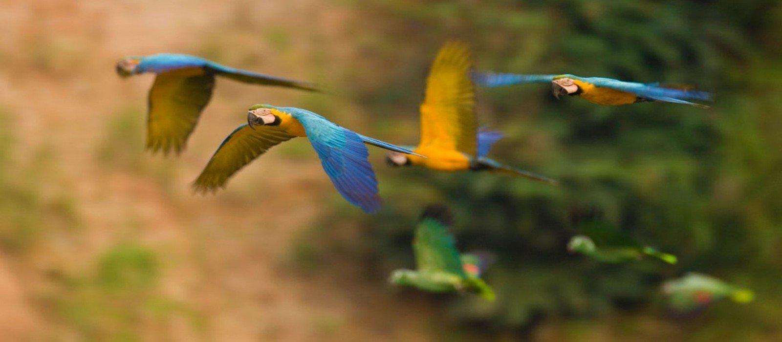 Posada Amazonas / Refugio Amazonas