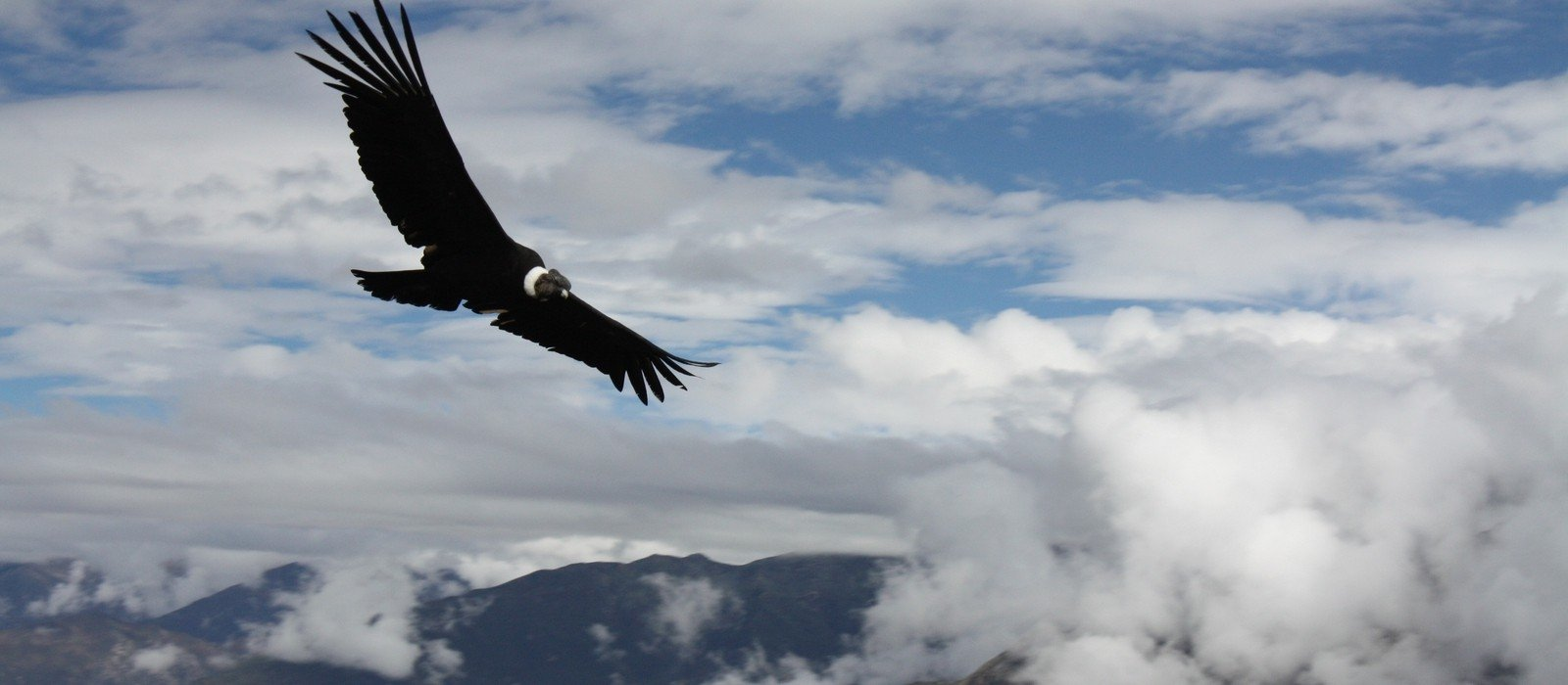 Views of Colca Canyon and Andean Condors
